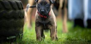 Culpeper Virginia's Premier Dog Trainer